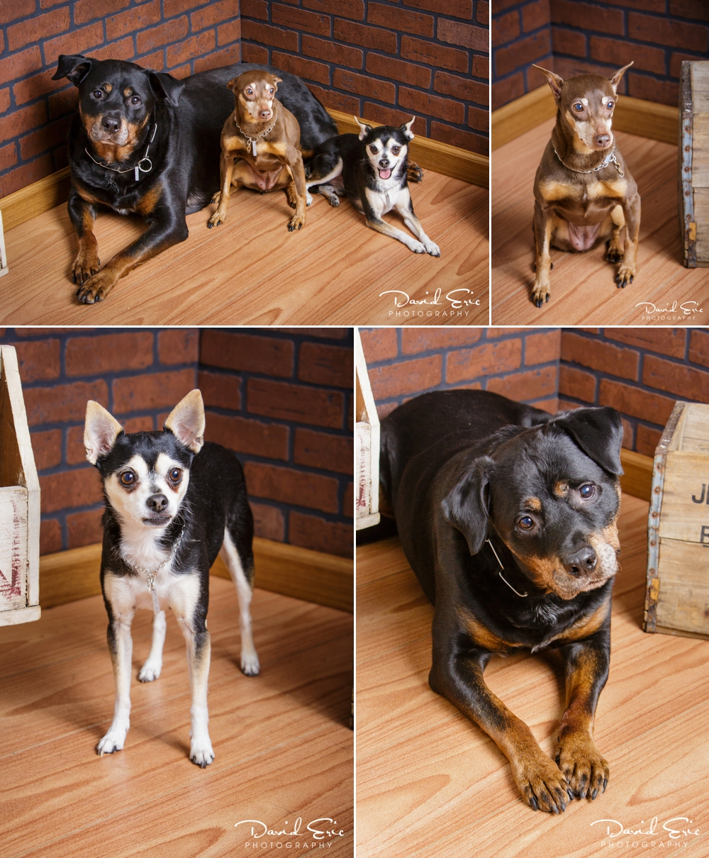 Pet-Portrait-Days-Collage-5.jpg