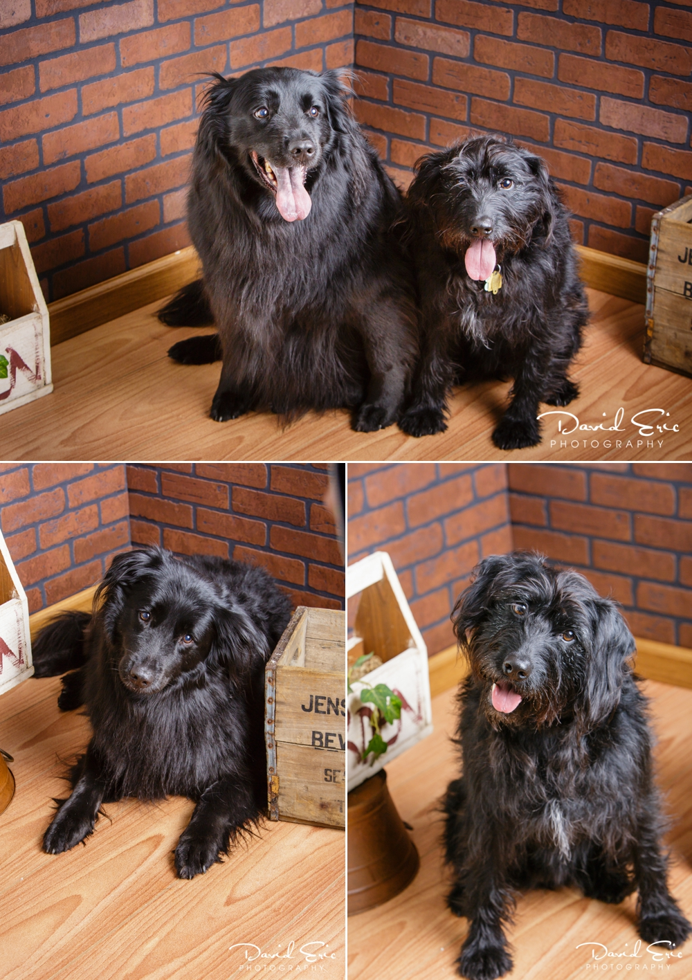 Pet-Portrait-Days-Collage-6.jpg
