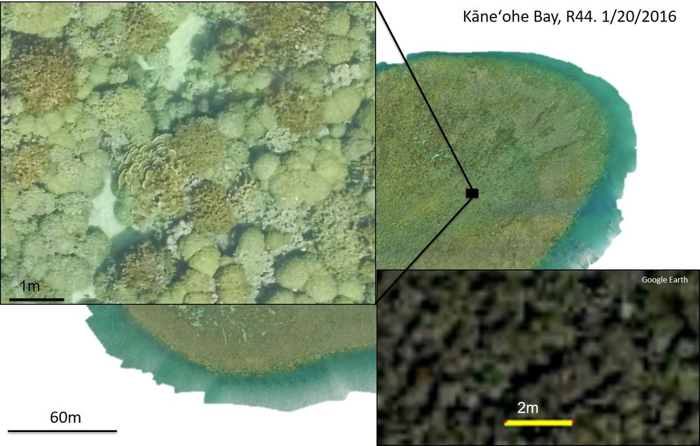An orthomosaic of a large (~55000 square meter) patch reef in Kaneohe Bay. Top left inset: magnified view of the orthomosaic, clearly showing coral colonies. Bottom right inset: Magnified satellite imagery of the same patch reef.