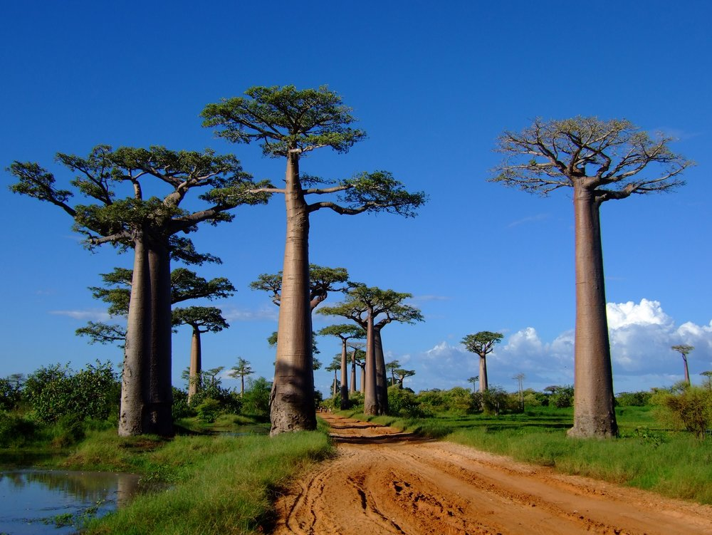 Unusual honeymoon destinations - Madagascar
