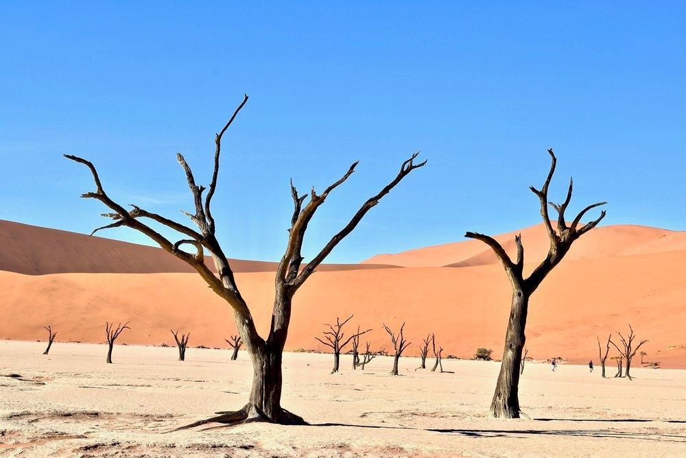 Unusual honeymoon destinations - Namibia