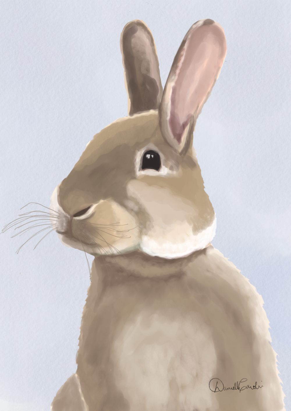 Rabbit1.png