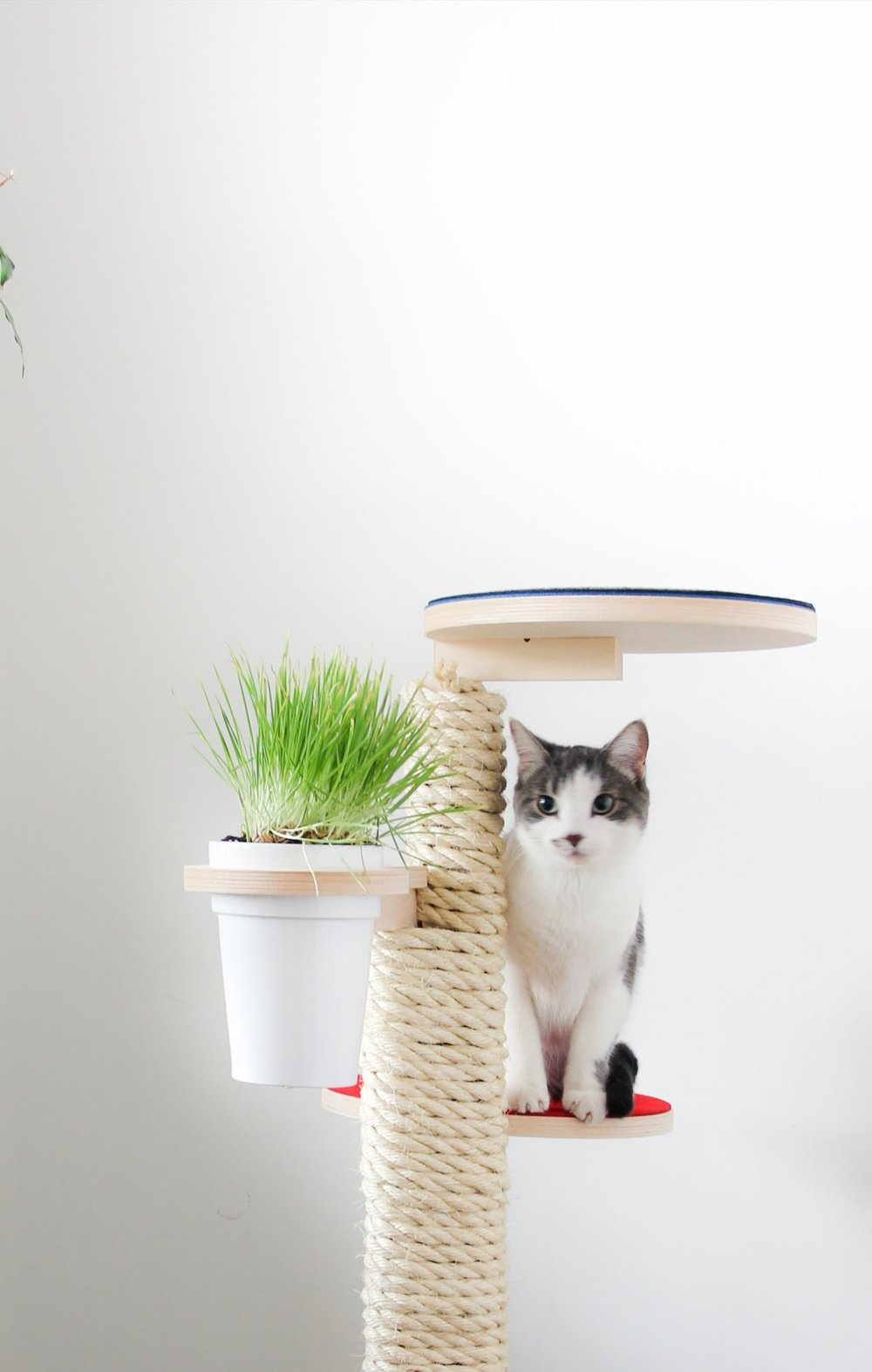 Cat grass holder - A Healthy snack for your cat! From $150 CAD. Shop Now!