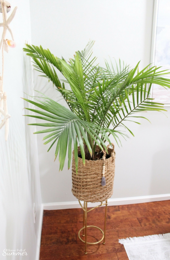 How to Care for an Indoor Majesty Palm | House Full of Summer - Coastal Home & Lifestyle, Florida home, plant care, palm trees indoors, growing tropical house plants #housefullofsummer