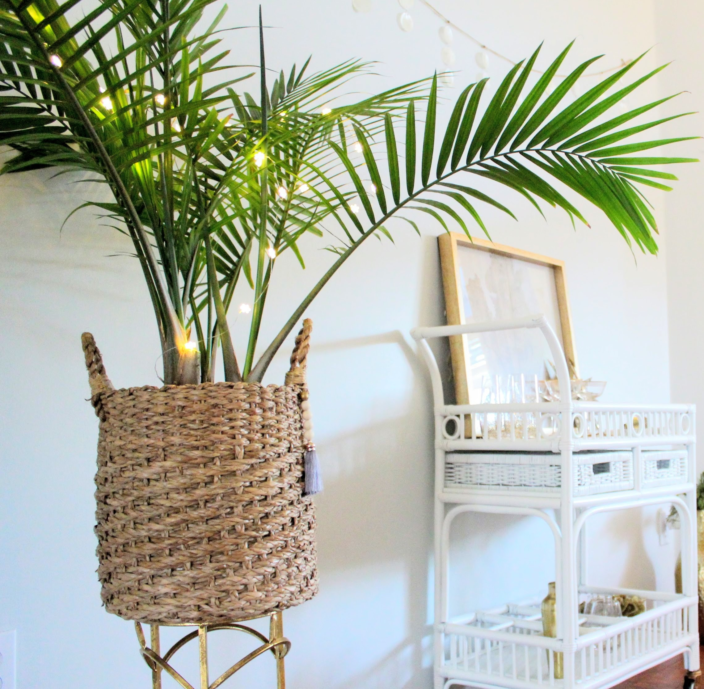 How to Care for an Indoor Majesty Palm — House Full of Summer