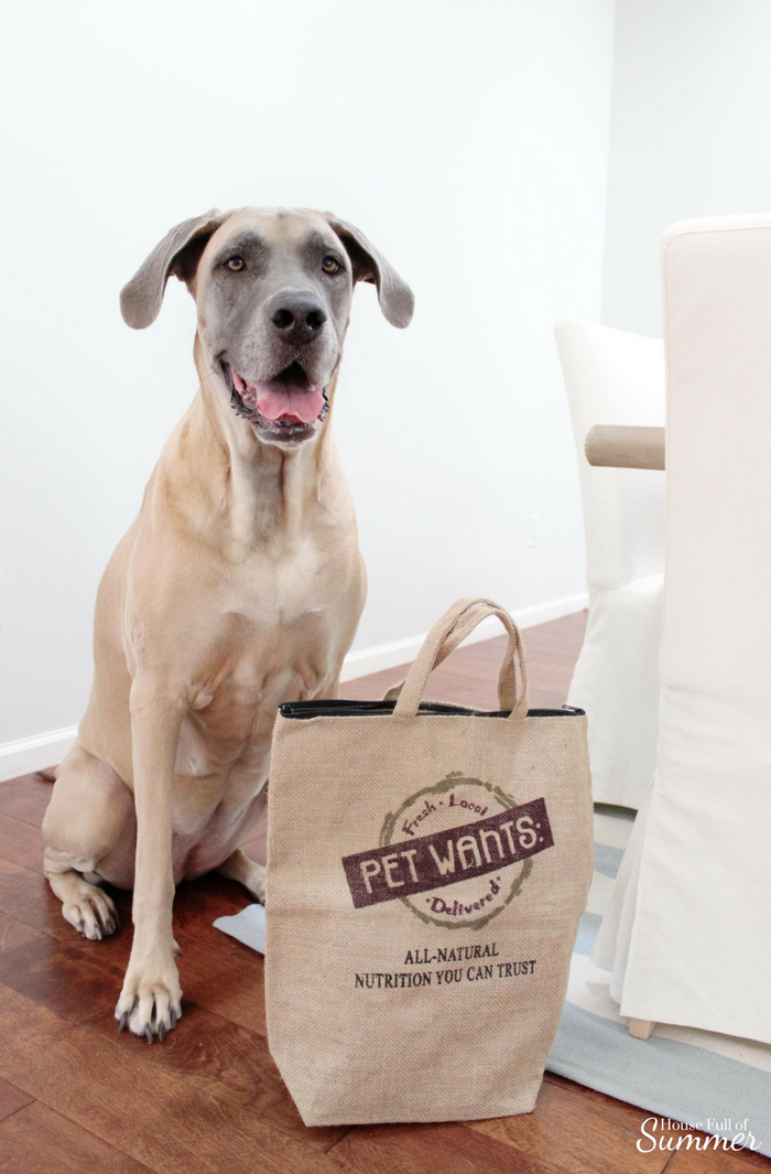 Spa Day With Summer - Helping Your Dog Live Their Best Life With Pet Wants fresh local food delivered, skin care, natural ingredients, dog food, flea and tick spray, paw pad care