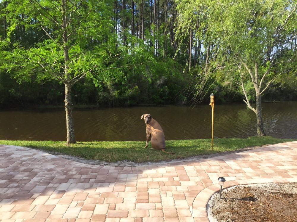 How We Turned Our Boring Backyard Into a Our Own Little Slice of Paradise | House Full of Summer backyard before and afters pool enclosure Florida home water view backyard design, coastal home, overgrown backyard, patio design, pool and pond, landscaping around screened pool enclosure