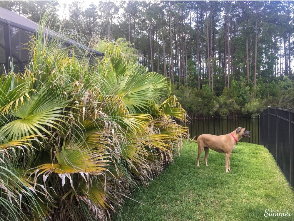 How We Turned Our Boring Backyard Into a Our Own Little Slice of Paradise | House Full of Summer backyard before and afters pool enclosure Florida home water view backyard design, coastal home, overgrown backyard, patio design, pool and pond palm fronds, privacy