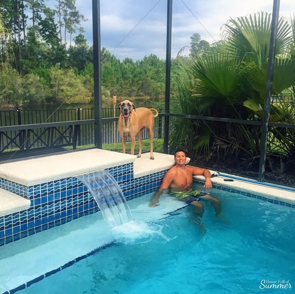 How We Turned Our Boring Backyard Into a Our Own Little Slice of Paradise | House Full of Summer backyard before and afters pool enclosure Florida home water view backyard design, coastal home, overgrown backyard, patio design, pool and pond Great Dane English Mastiff  palm fronds, pool enclosure design, landscaping