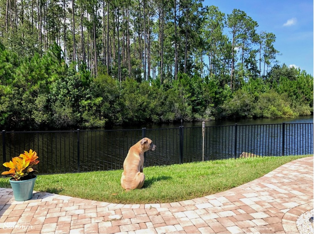 How We Turned Our Boring Backyard Into a Our Own Little Slice of Paradise | House Full of Summer backyard before and afters pool enclosure Florida home water view backyard design, coastal home, overgrown backyard, patio design, pool and pond