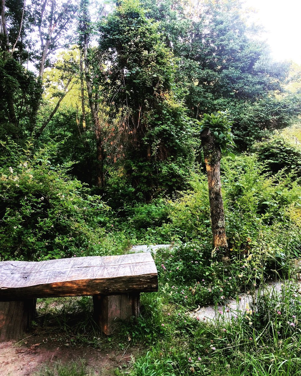 Old Croton Aqueduct Trail - Sleepy Hollow, NY