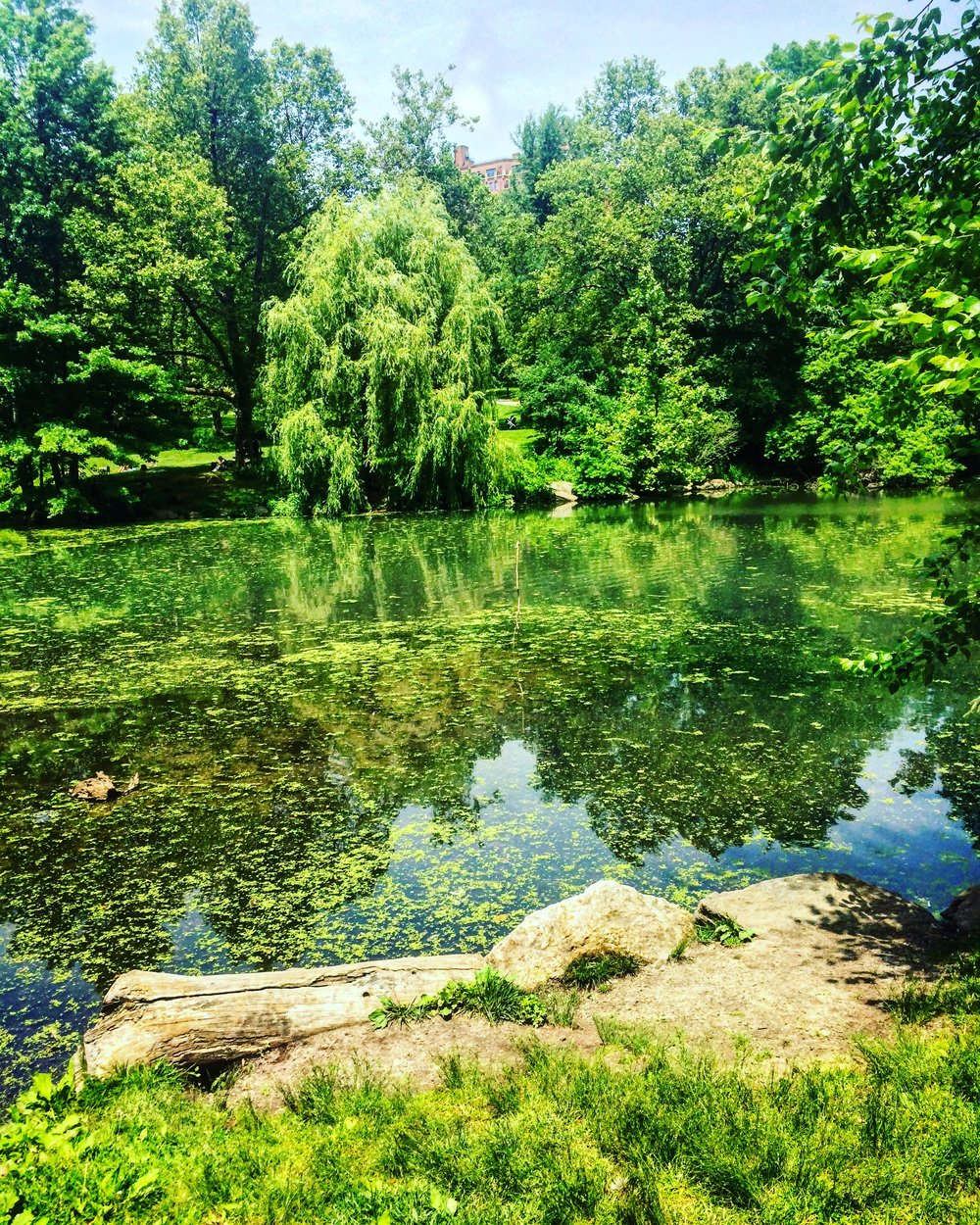 North Woods, Central Park - New York City