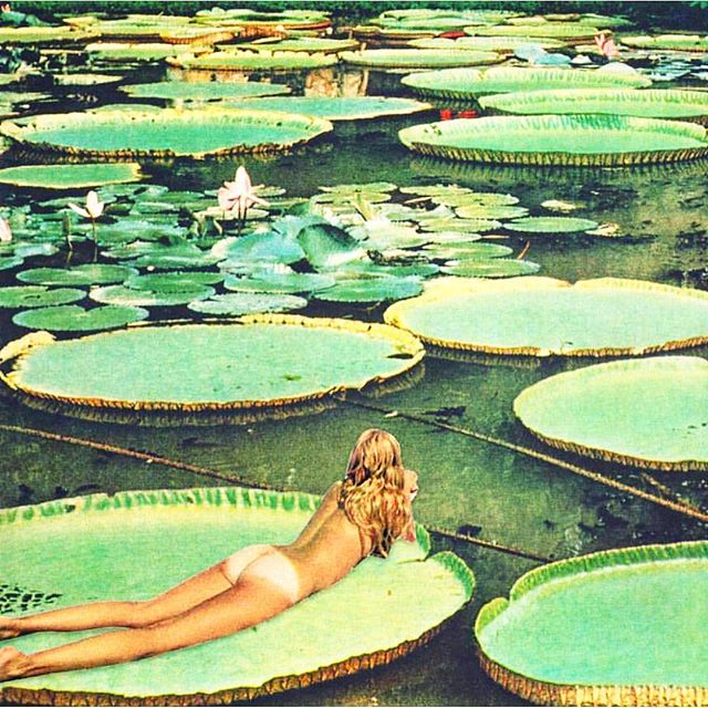 Mezcal Mondays has us floating through the week like... . . . . . . . #doñasaritamezcal #doñasarita #mezcalblanco #cocktails #mexico #newyorkcity #besitos #Oaxacca #love #hamptons #montauk #amantes #art #art #lillypads #vibe  #beautiful #pistolclub