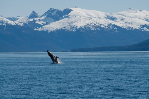 May 30 - June 6 - Juneau to PetersburgBook before January 1st and save 15%