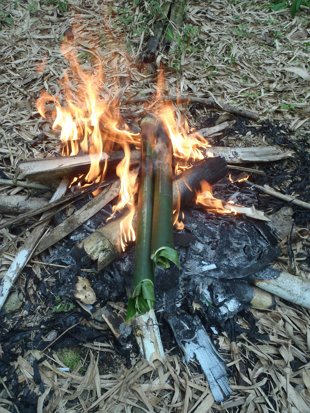 Wildfood Tour in the fire.jpg