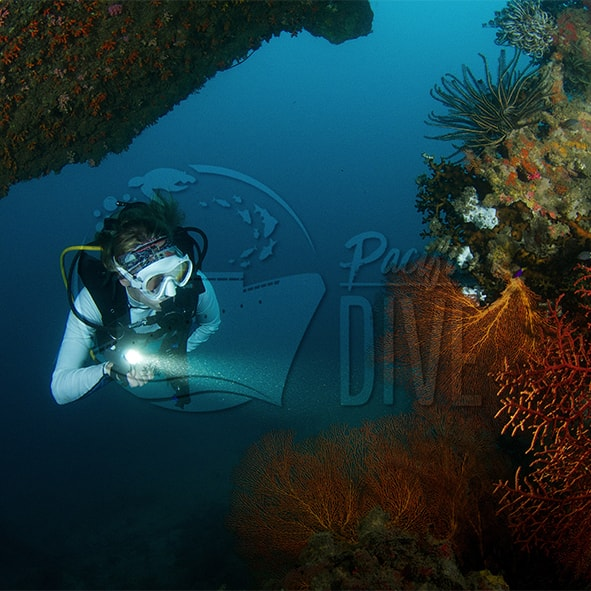 Pacific Dive Member Square.jpg