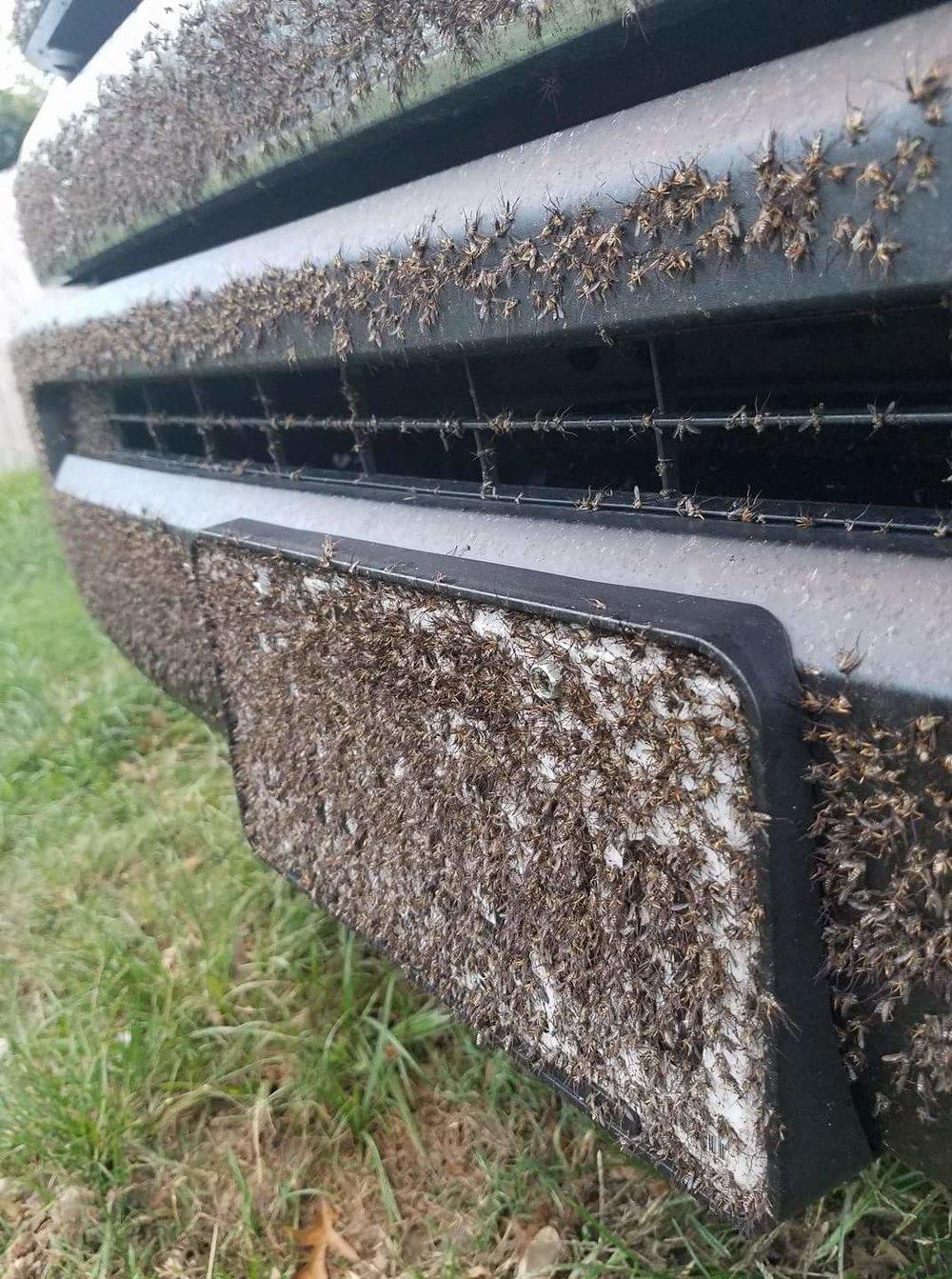 Des hordes de moustiques descendent maintenant dans de nombreuses region. - Ce que nous voyons dans ces images est la preuve que les moustiques d'eau de crue avaient déjà amorcé la ponte lorsque Harvey a frappé la côte supérieure du Golfe il y a deux semaines. Lorsque les pluies sont venues, des œufs précédemment pondu ont éclos à travers des milliers de miles carrés de prairies côtières et de marais, et des milliards de larves de Psorophora ont traversé une cycle rapide.Ajoutez à cela la portée de la catastrophe. Les précipitations sans précédent de Harvey ont touché plus de 400 milles du littoral du golfe, déversant environ 27 milliards de gallons d'eau. La ville de Houston a doublé le record de précipitations mensuel de 39,11 pouces (et Houston reçoit beaucoup de pluie). Je soupçonne que le nombre de moustiques qui volent autour de l'état en ce moment est également sans précédent.Alors ne soyez pas surpris de lire et d'entendre beaucoup d'histoires de moustiques au cours des prochaines semaines. Si vous devez vous déplacez dans cette partie du Texas, il existe un moyen de vous protégez. Pour les conditions extrêmes, un filet anti-moustiques sera nécessaire. Portez des tissus à manches longues colorées et serrées . Des t-shirts ou des chemises à manches courtes ne suffiront pas.Et n'oubliez pas d'apporter du répulsif DEET. Beaucoup !