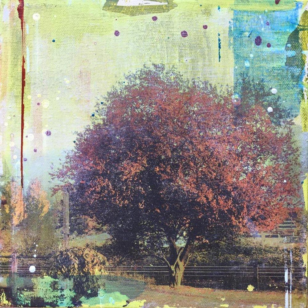 MAVIS AND GLOVER TREE.jpg