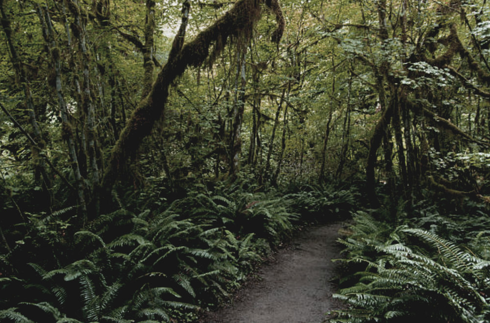 hoh rainforest, washington -