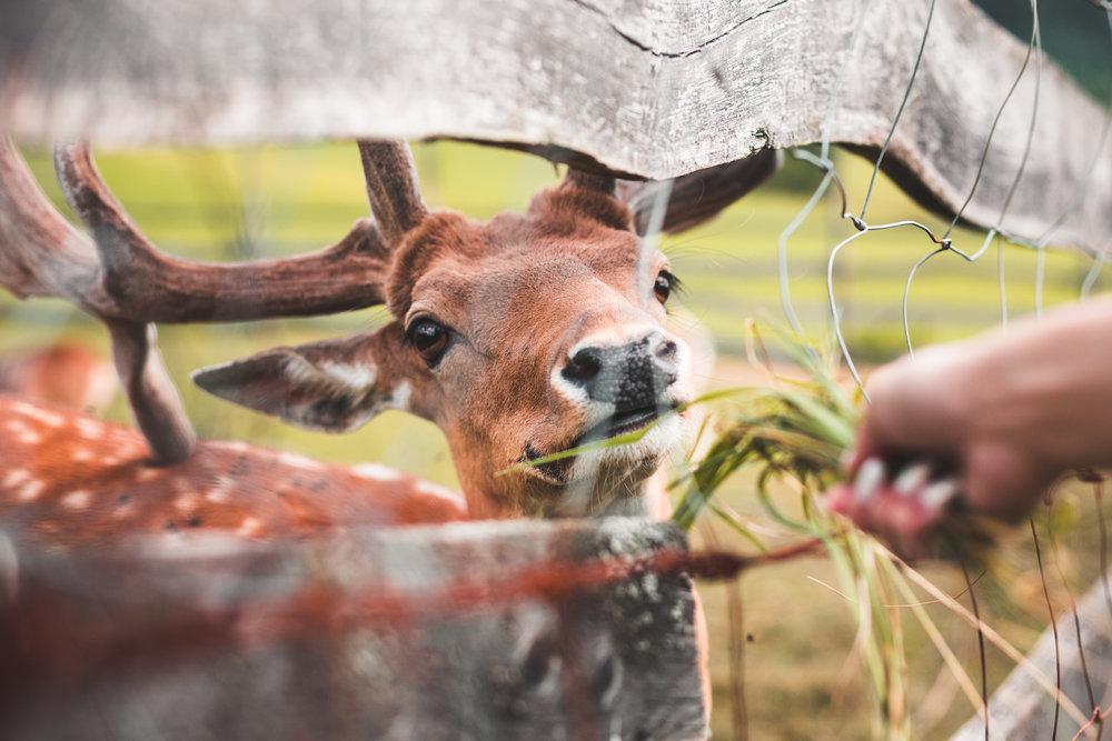 feeding-a-deer-picjumbo-com.jpg