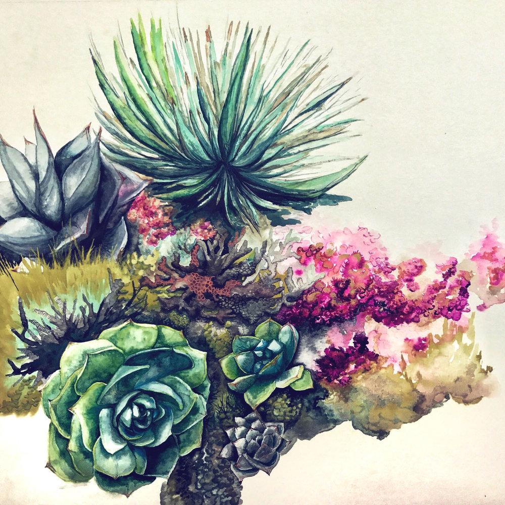 """Succulents"" - in progress"