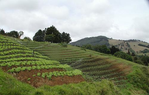 puerto rico farm.jpg