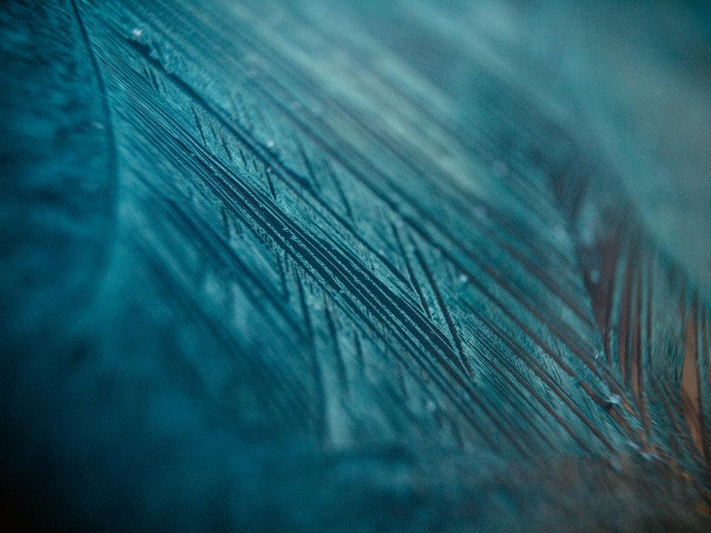 frost-21.jpg