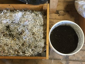 Shredded paper bedding next to a bucket of castings