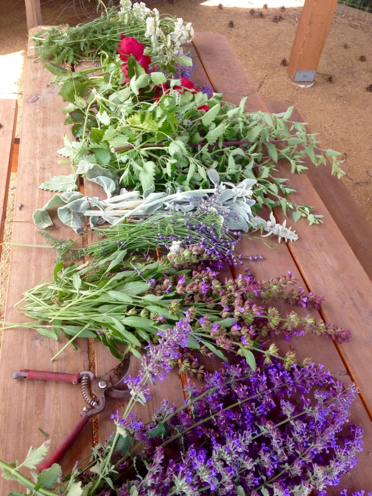 The bounty I gathered one sunny weekend at the Providence Garden. Lavender, Beebalm, Yarro, Lambsear and others which are either aromatheraputic, can be used medicinally, or are sensory to the touch.