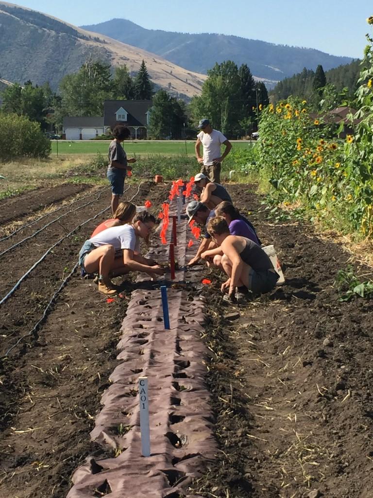 Planting at the PEAS Farm.