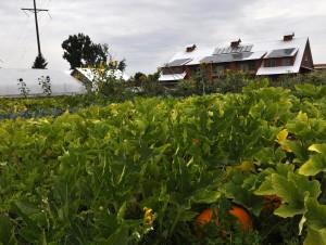Orchard Gardens Farm
