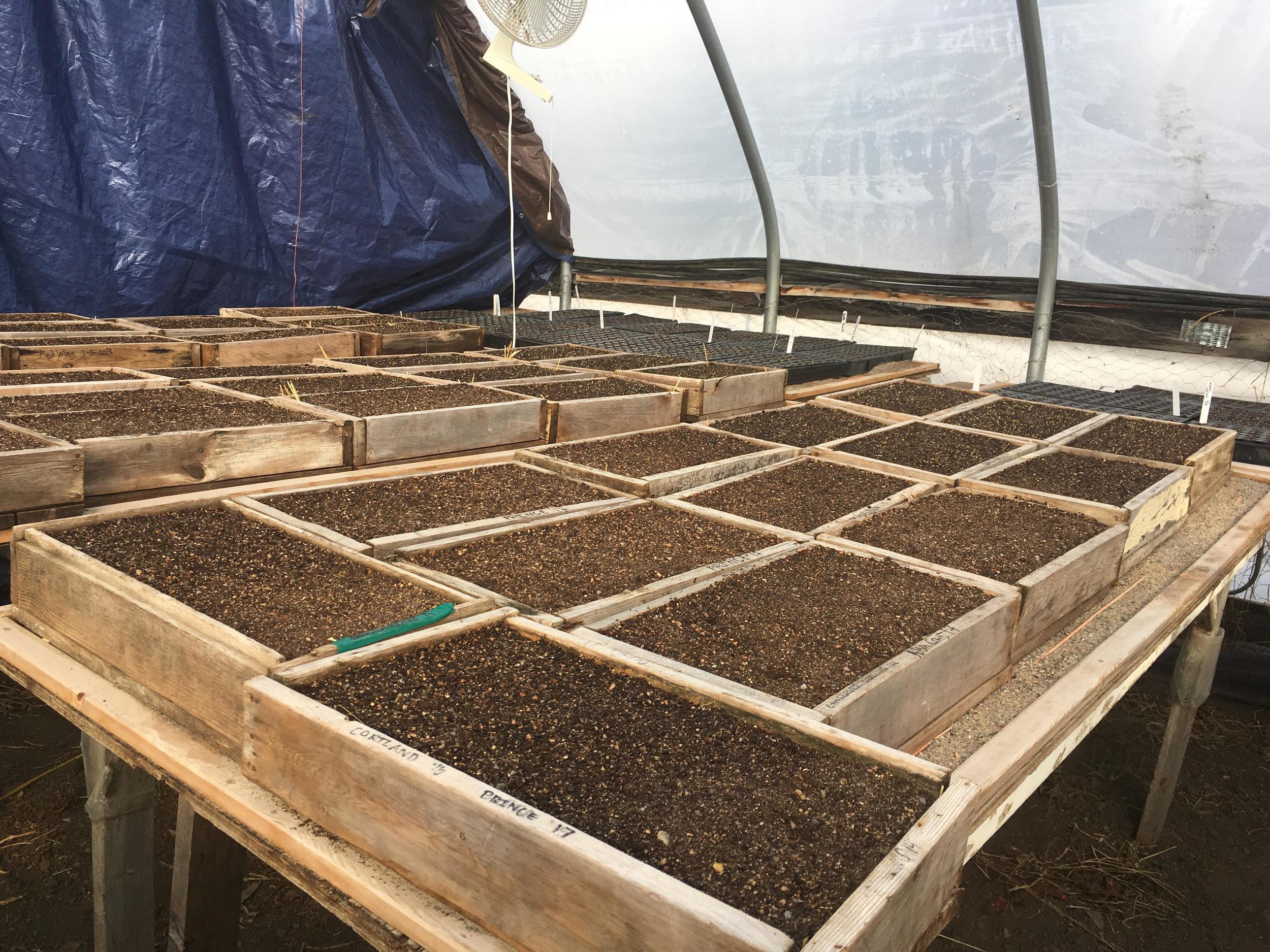 Head Starts With Starts — Garden City Harvest
