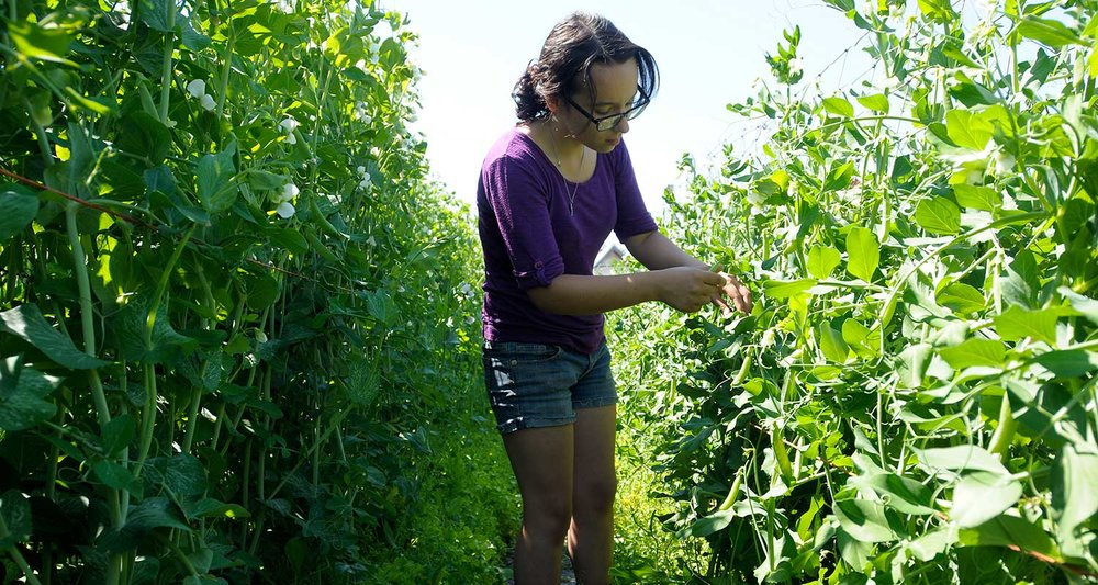 Youth Harvest project - Photo by Tom Bauer/Missouiian