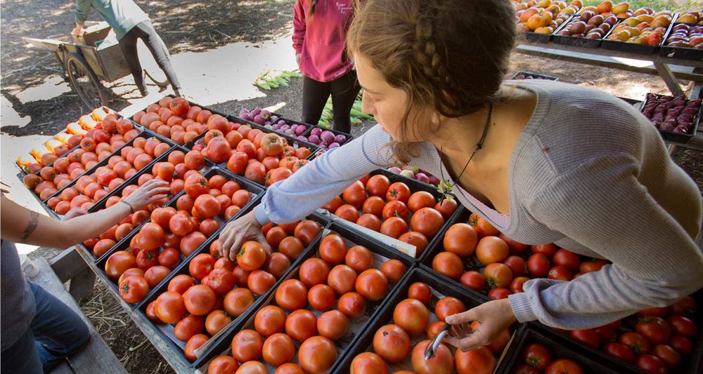 CSA Farm Shares - Photo by Lisa DiGiacomo