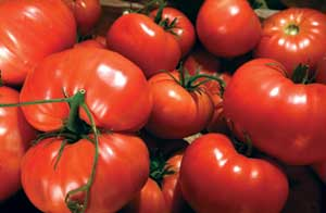 Casey recommended these varieties: - Early Girl, Sweet 100, Patio, Celebrity, Roma and San Marzano