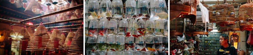 hong kong flower market and man mo temple