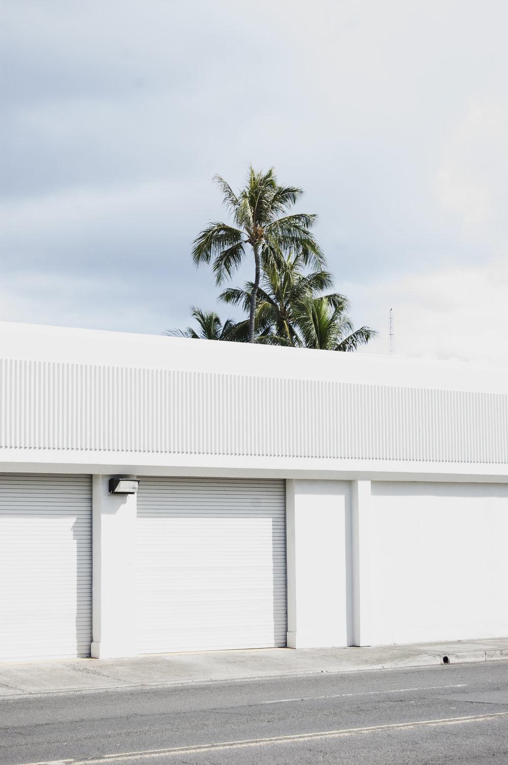 peeky_palm_trees.jpg