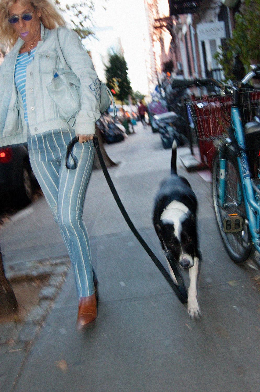 dog_walk_forweb.jpg