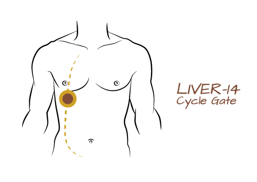 Yellow_02_Liver14.png