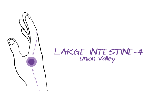Purple_03_LargeIntestine.png
