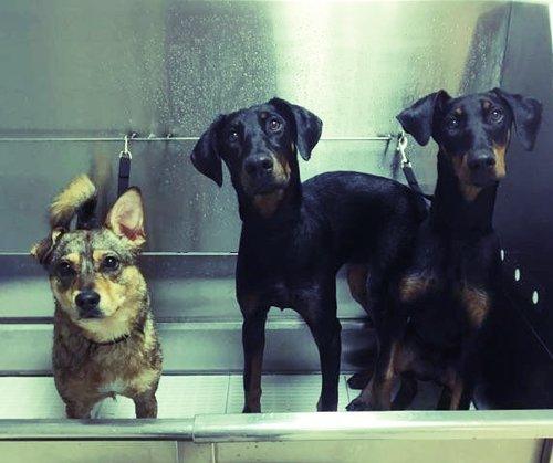 Two brothers dog wash 29818eg solutioingenieria Choice Image