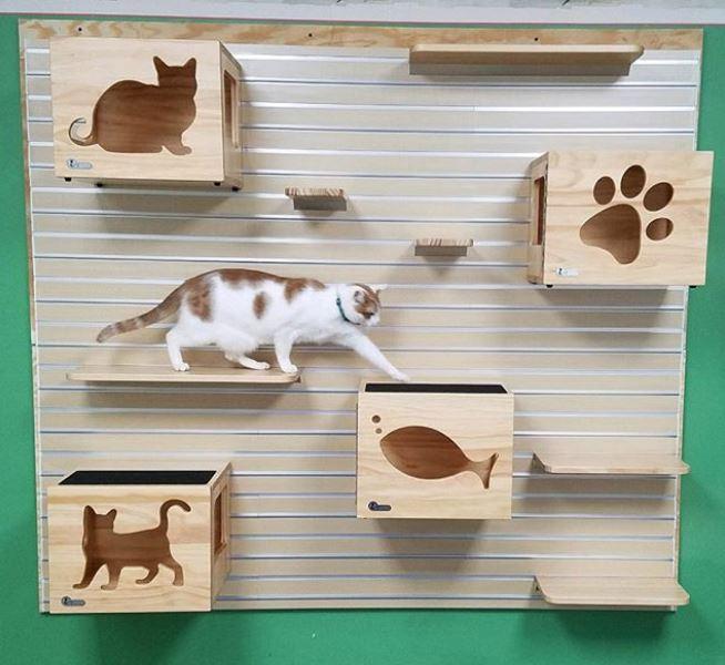 Cat wall.JPG