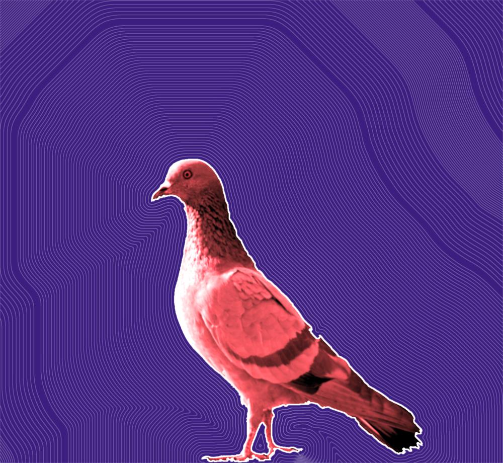 Pigeon Rock Baby