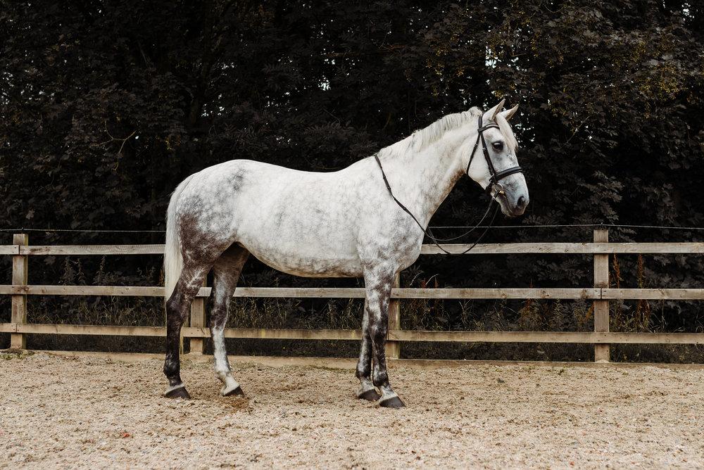 Lancashire equine photographer