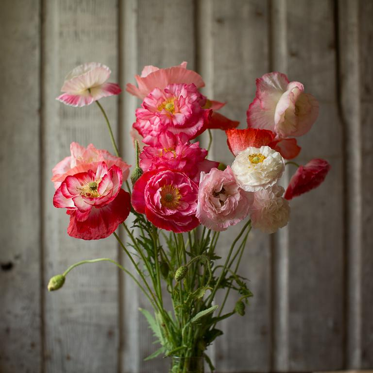 Photo Credit:  Floret Flowers (Shop)