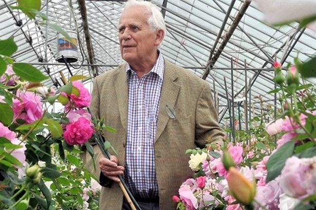 David Austin. Photo credit: davidaustinroses.com
