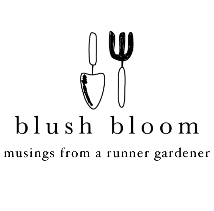 BLUSH BLOOM