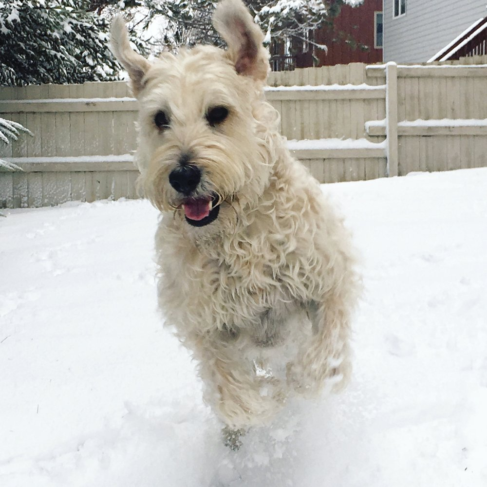 He is like a snow bunny! Look how hapy he is in the snow!