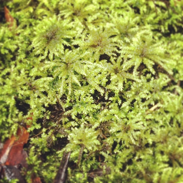 Moss from Sherbrooke Forest
