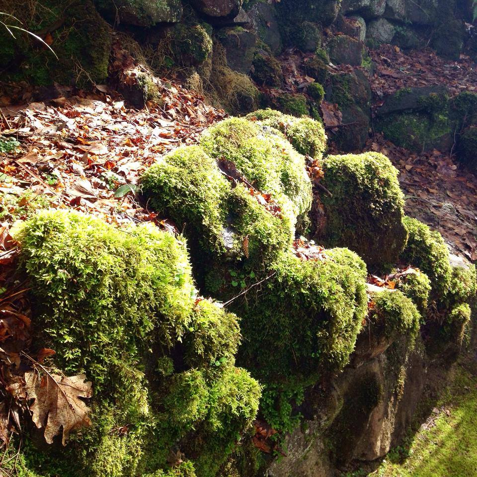 Moss from Sherbrooke Forest by Sacred Familiar